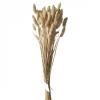 bouquet de philaris